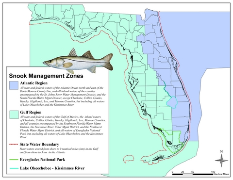 snook management zone robalo