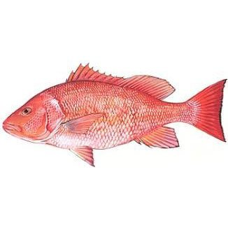 Red Snapper Fishing opens six additional Days